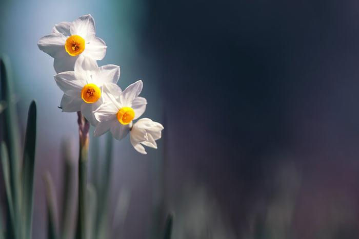 هذه هي الانثي  Beauty-Flowers+%2822%29