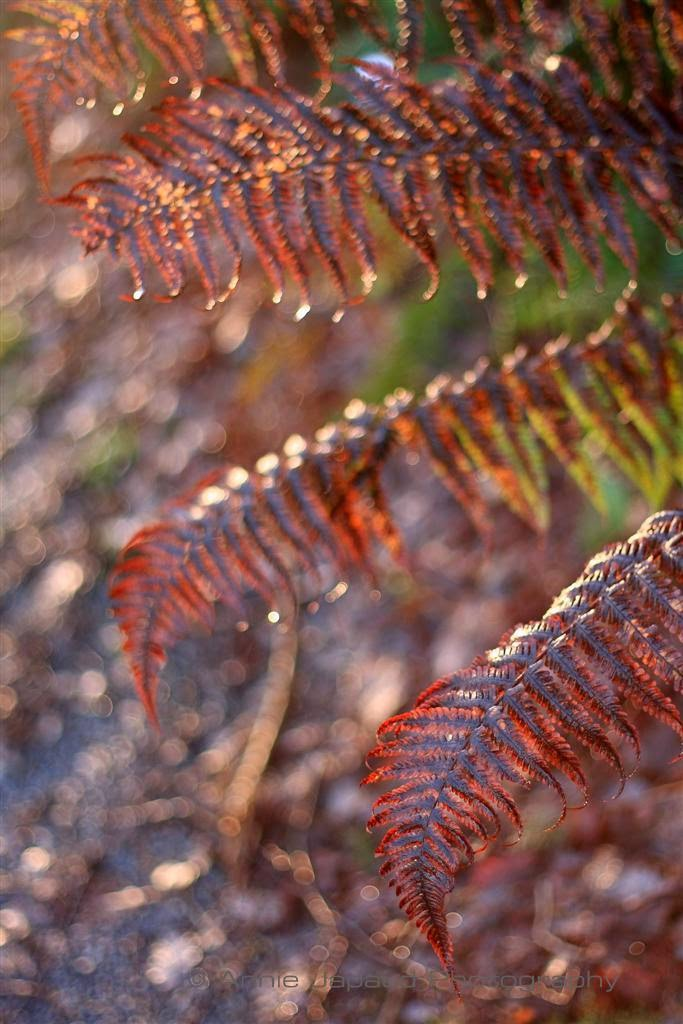 ferns light