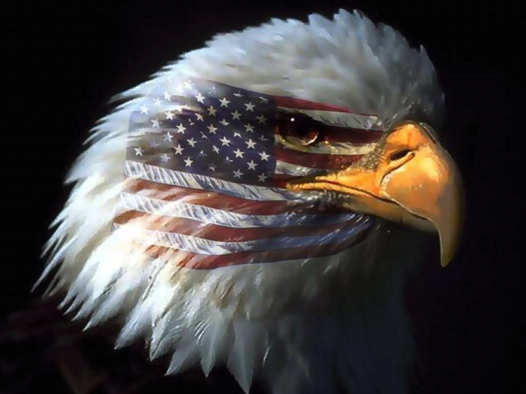 http://2.bp.blogspot.com/-QbcoRlVV9I4/T8crLqPuPqI/AAAAAAAAEEI/aRYF1iLwxm8/s1600/American+Bald+Eagle+Wallpaper.jpeg