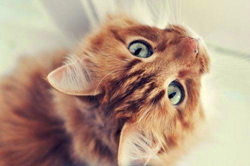 Marzy Mi Się Rudy Kot Czyli O Kocich Kolorkach A Rudzielcach
