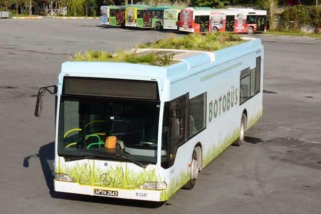 Yeşil saçlı otobüs