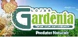 http://www.google.com.br/imgres?um=1&hl=pt-PT&sa=N&biw=1440&bih=732&tbm=isch&tbnid=fgC3xMBhcbt5HM:&imgrefurl=http://www.apontador.com.br/local/al/maceio/alimentos/88D9KXLM/lojas_gardenia.html&docid=iK1YhA5Nv9FgtM&imgurl=https://localphoto.s3.amazonaws.com/lojas_gardenia_242984936649732_s.jpg&w=160&h=77&ei=-MI0UdjbAsm50AG6hICAAQ&zoom=1&ved=1t:3588,r:3,s:0,i:89&iact=rc&dur=480&sig=111202385063434407742&page=1&tbnh=61&tbnw=128&start=0&ndsp=20&tx=79&ty=22