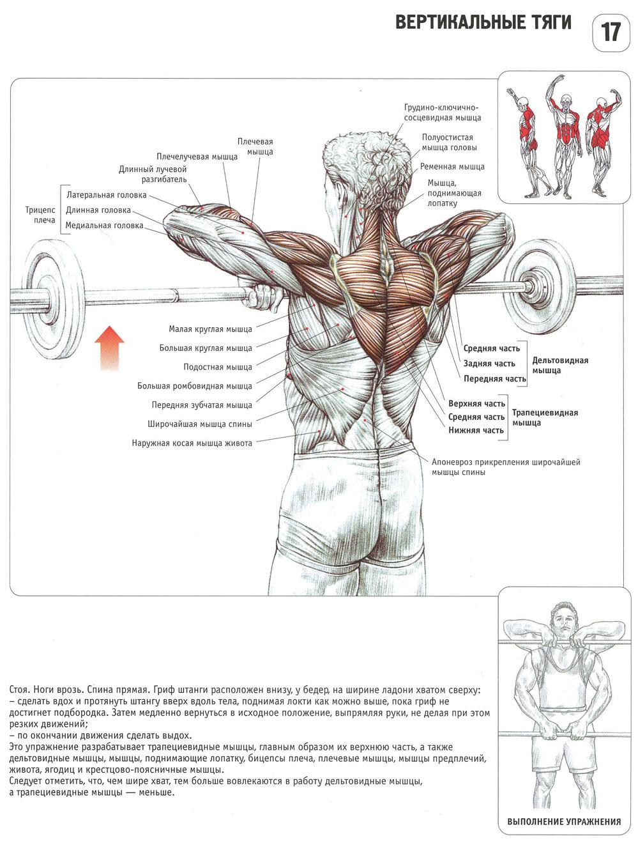 Как сделать спину узкой