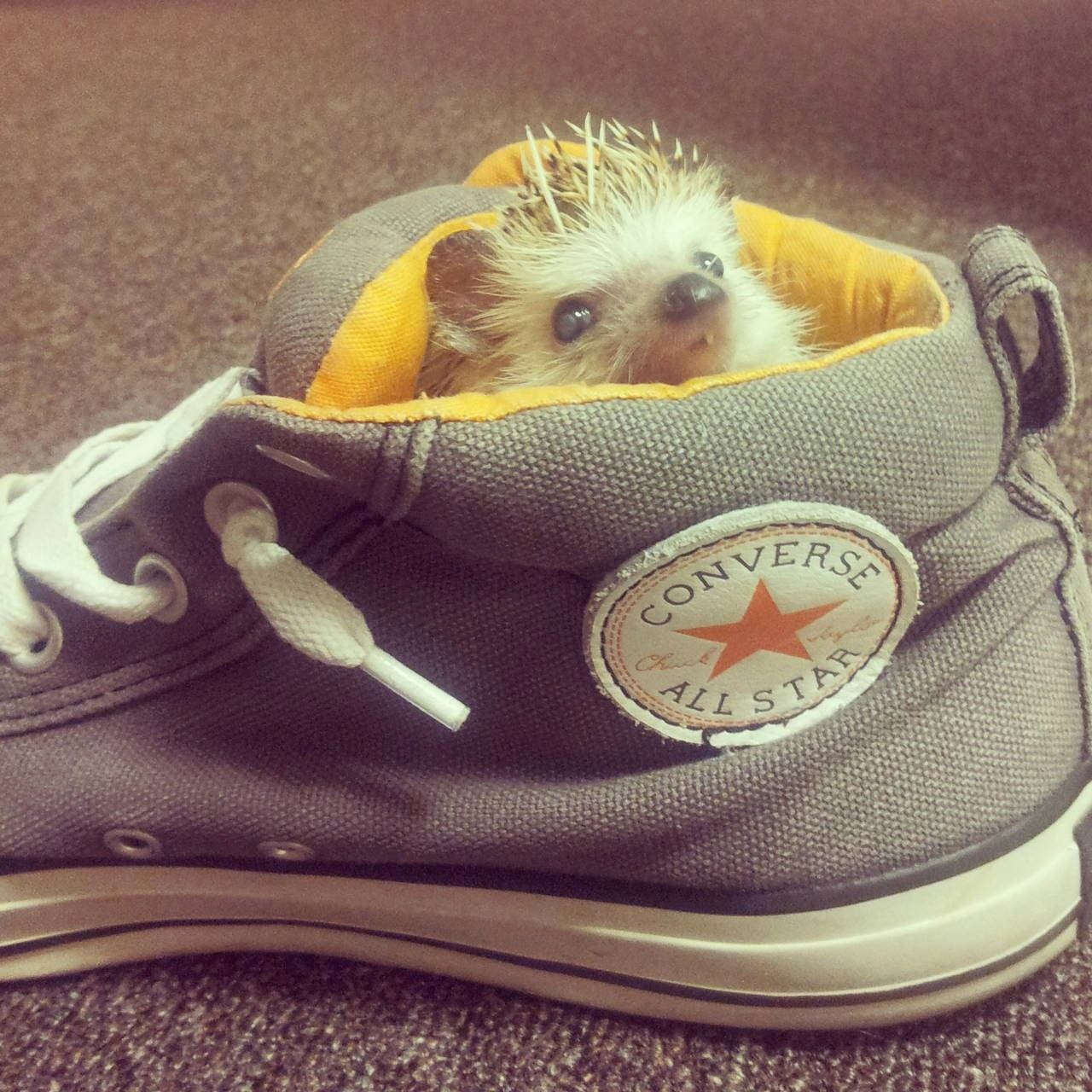 Funny animals of the week - 9 May 2014 (40 pics), cute animals, animal photos, hedgehog sits inside a shoe