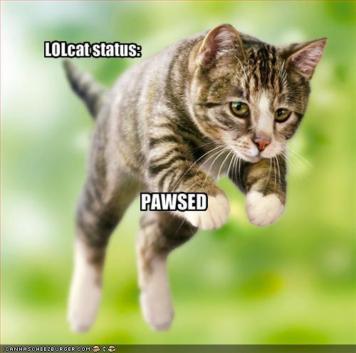 funny cat picture - funny cat pictures-LOLCAT-STATUS-PAWSED