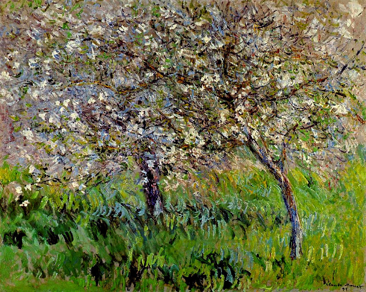 art artists claude monet part  claude monet 1900 01 apple trees in bloom at giverny oil on canvas private collection