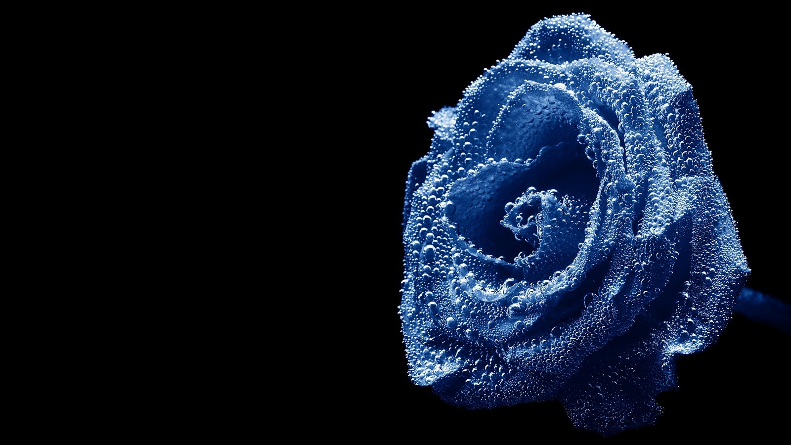 http://2.bp.blogspot.com/-QcUMW8CAUD4/TVo4EWh4RFI/AAAAAAAAAH8/4zTiDEHF56g/s1600/Water-drops-over-a-beautiful-blue-rose-HD-Wallpapers-for-normal-and-widescreen-desktop-background.jpg