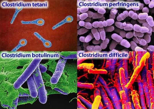 Bakteri pada makanan kaleng