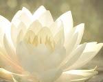 Así como la flor de loto se abre paso
