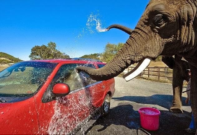 اغرب غسيل سيارات فى العالم عن طريق الفيله