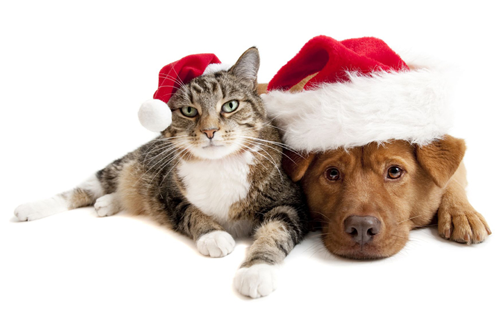 Cute christmas animals - photo#12