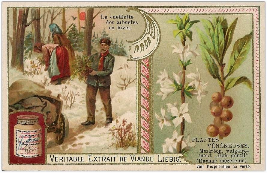 H raldie henri coupin les plantes qui tuent for Espaces verts du languedoc