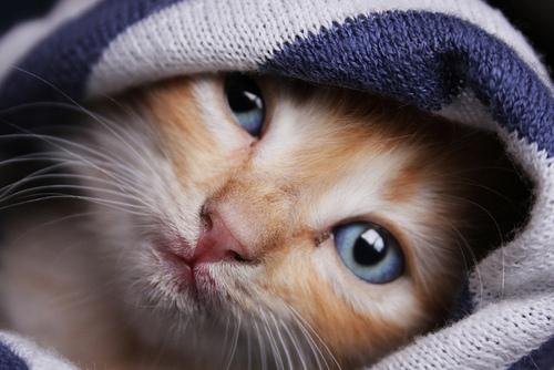 Σερενάτα- Arleta-Αρλέτα-μουσική-γατούλα-γάτα-cat-love-αγάπη-χωρισμός
