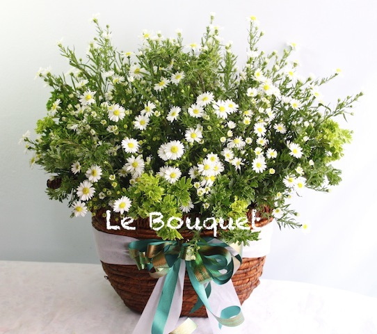 Le bouquet floral and gift boutique white peacock flower basket white peacock flower basket mightylinksfo