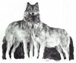 Imagenes de lobos en grises