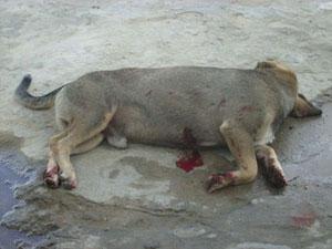 Cão assassinado por PM