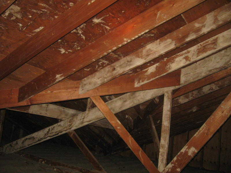 White Mold in Attic & White Mold in Attic - White Mold Removal | White Mold In Basement ...