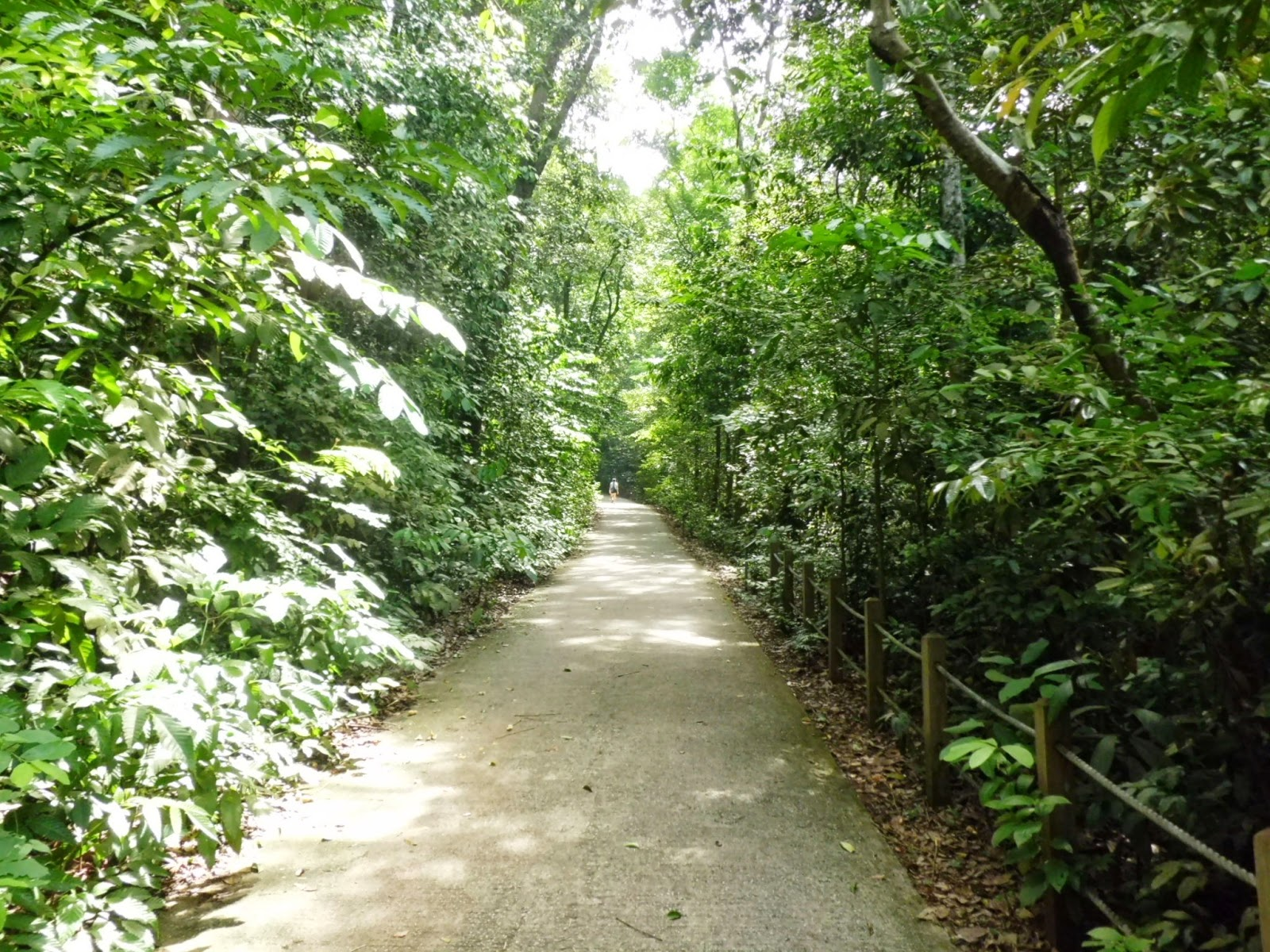 The start of the Main Road (1.1km) stretching from the visitor centre to the summit of Bukit Timah Hill
