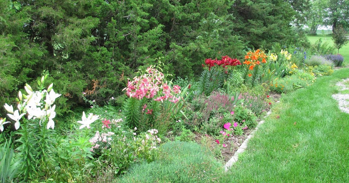 Garden Fancy: Lilies and the Rainbow Border