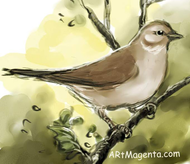 Garden warbler is a bird drawing by artist an illustrator Artmagenta