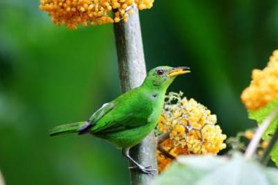 Mirador de aves en el Parque Nacional Corcovado