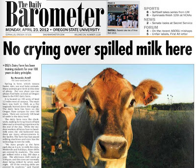 Cow front-page story Barometer April 23, 2012, p. 1