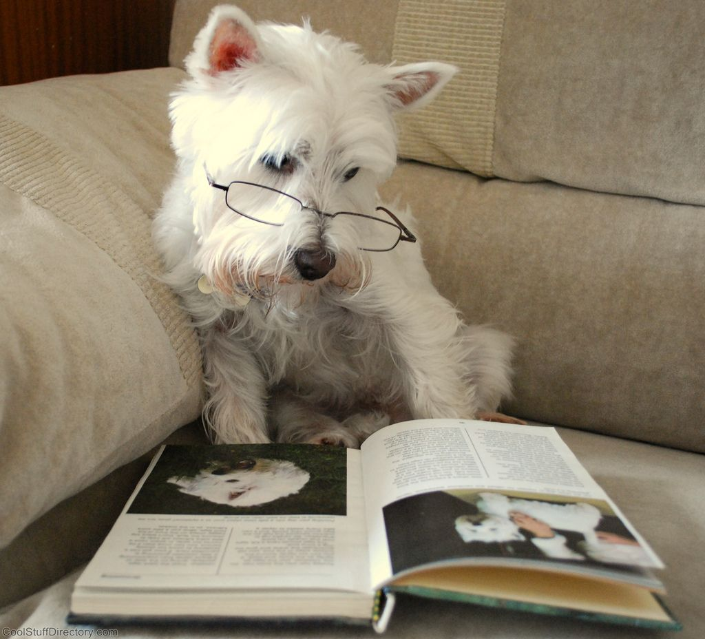 1. Dog reading a book by Margaret Konikkara