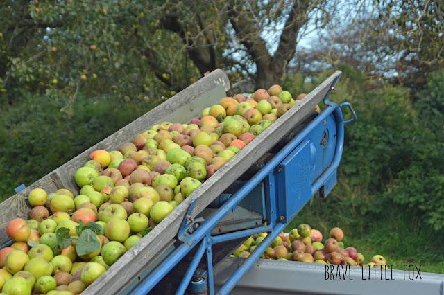 Äpfel Mosterei