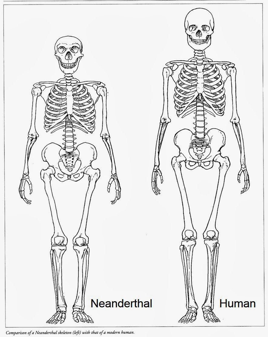 Help with an essay about Neanderthal extinction?
