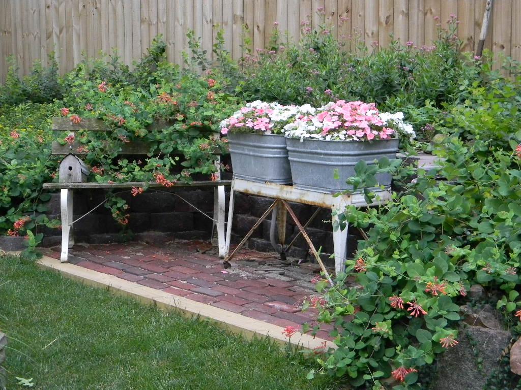 through my garden window garden bloom day. Black Bedroom Furniture Sets. Home Design Ideas