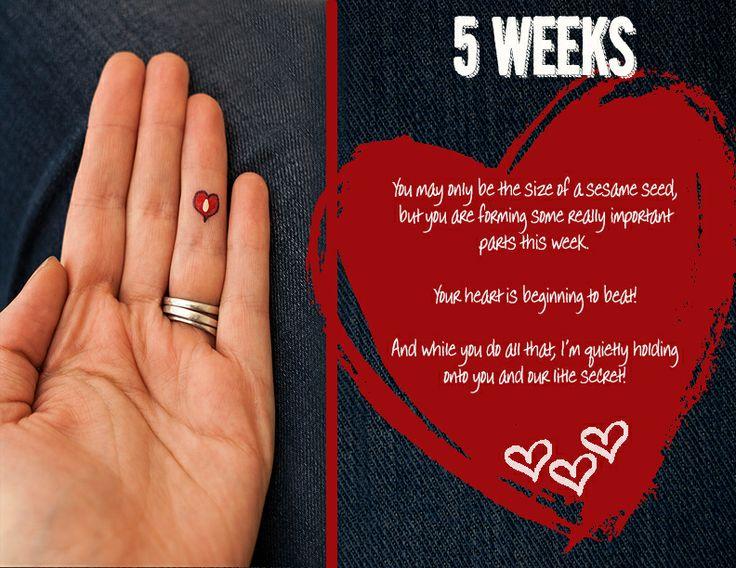 gravid i uge 5