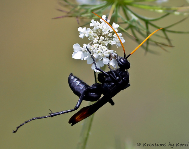 Bug -  Doing the Hokey Pokey