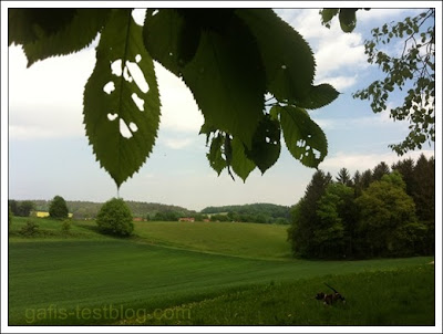 Blätter und Boxer Amy am Waldrand