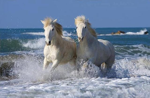 رحلة عالم الخيول
