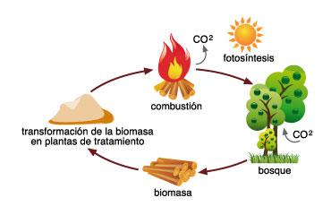 Producción de Biomasa