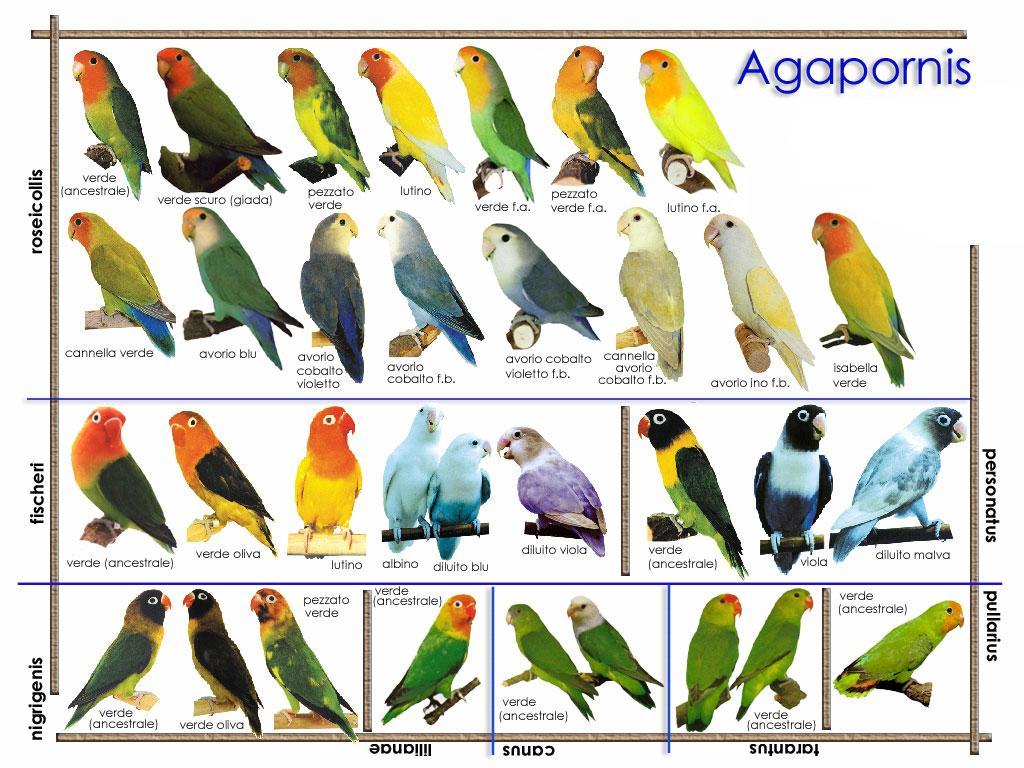 O mundo das minhas aves agapornis for Como criar caracoles de jardin