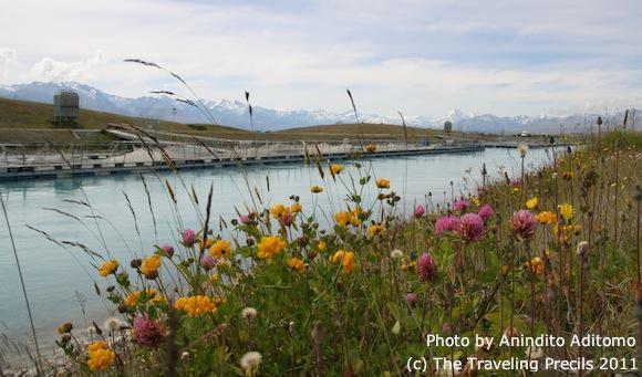 Bunga-bunga liar di tepi kanal air