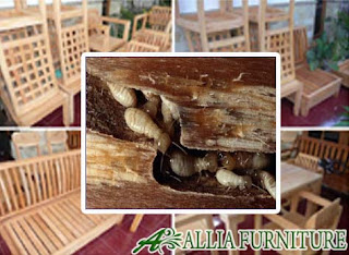 Rayap Furniture Berbahan Kayu
