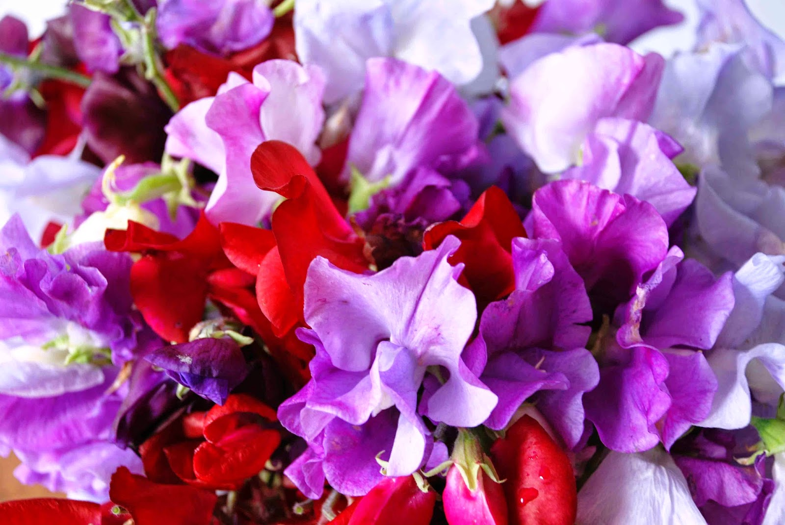 how to cut sweet peas