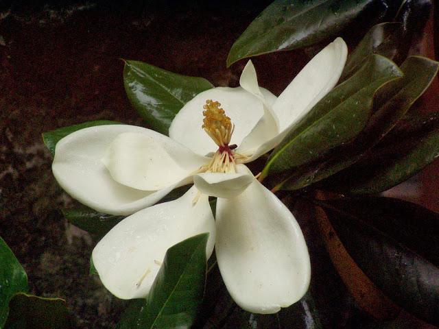 Suzhou gardens flower