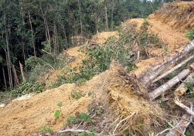 kesan pembalakan haram musnahkan hutan, pencerobohan hutan, hutan botak, penggondolan hutan, lindungi hutan, pencemaran sungai dan alam sekitar kesan pembalakan haram, kemusnahan hutan Malaysia tahun 2014