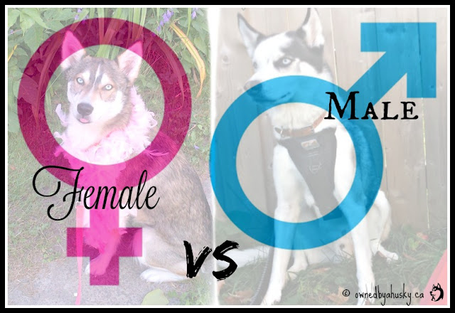 Which Is Better? Male VS Female Dogs