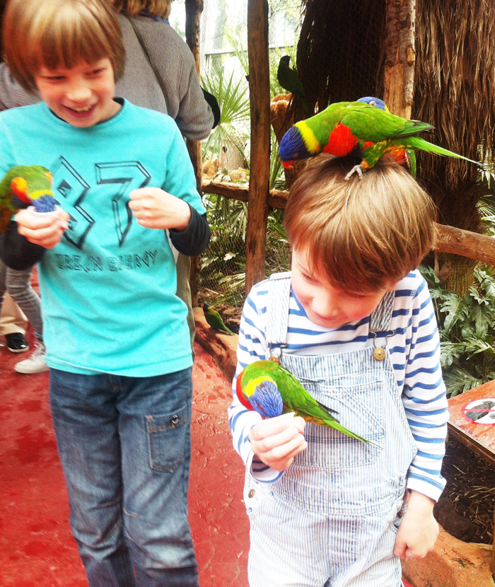 Loris parrots in avifauna in the Netherlands