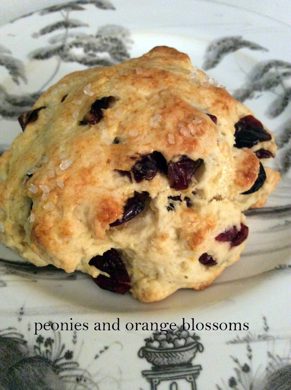 here i made cranberry buttermilk scones now this scone recipe