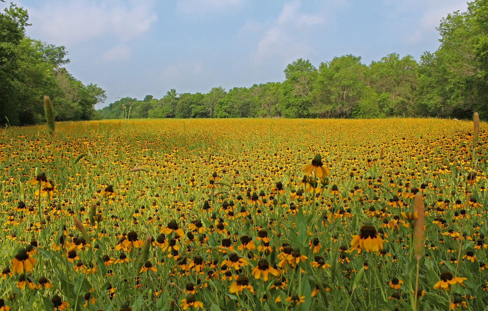 Dallas Trinity Trails The Largest Wildflower Meadow In Dallas
