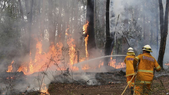 Jokowi Intruksikan Cabut Izin Perusahaan Pembakar Hutan