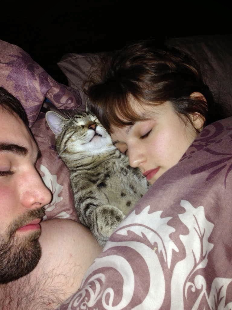 Funny cats - part 82 (40 pics + 10 gifs), cat photo, cat sleeps with his humans