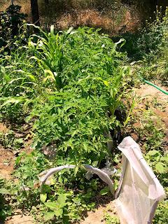 Το δικό μας σπορείο λαχανικών