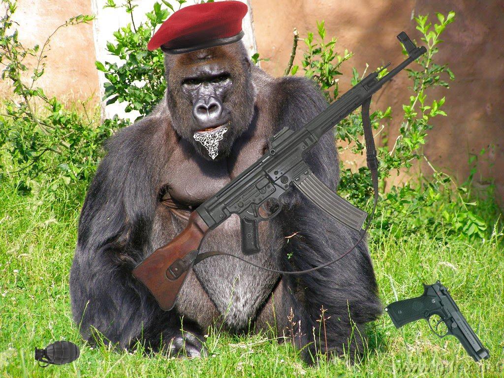 Nuestra tierra, sus seres y paisajes ... ;) - Página 9 Gorilla002