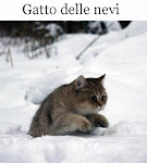 Il gatto delle nevi